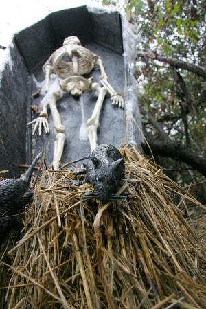 Gummi-Ratte Flucht aus dekorativen menschlichen Skeletts in Sarg.