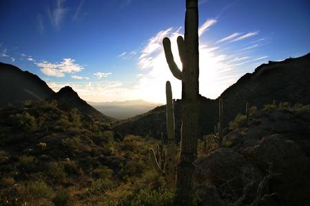 Sonnenuntergang in der Sonora-W�ste in der N�he von Tucson Arizona.