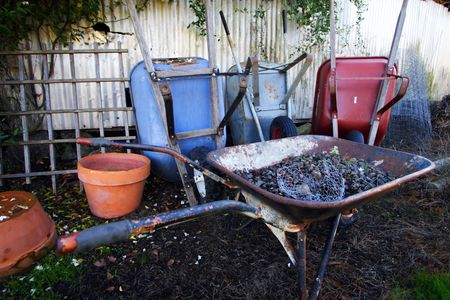 A cluster of colorful wheelbarrows in the garden after a light rain.