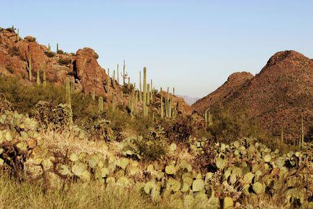 Mountain Pass in der Sonora-W�ste in der N�he von Tucson Arizona