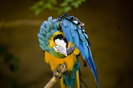 A colorful yellow and blue parrot on a tree branch