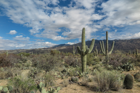 Landscape view of Saguaro National Park East, Tucson, Arizona Stock Photo