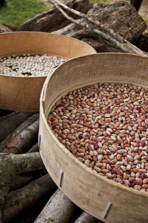 italian cusine: brown and white beans drying in the sun inside of handcrafted wooden sieves according to italian farmer tradition