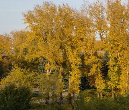 Autumn in Abakan   photo