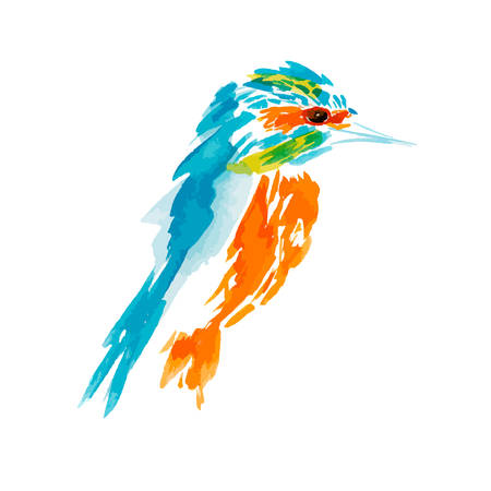 Kingfisher, bird illustration