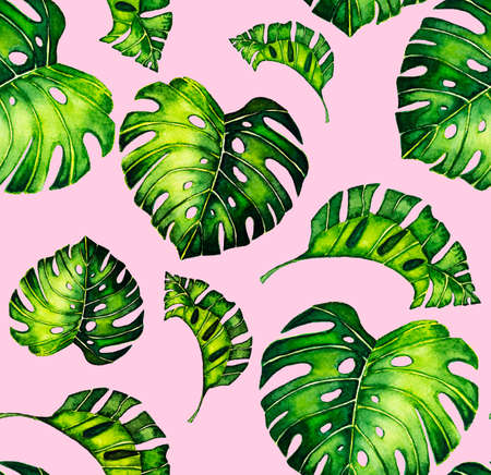 Seamless pattern of leaves monstera. Tropical leaves of palm tree.  background. Reklamní fotografie