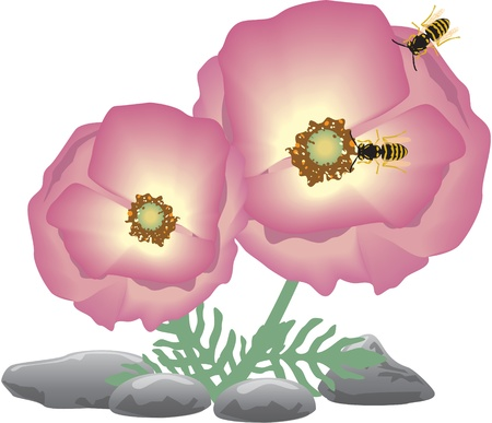 two pink flower with bees Vector