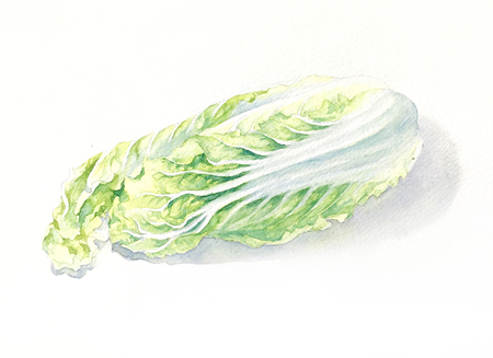 Watercolor hand-painted Chinese cabbage