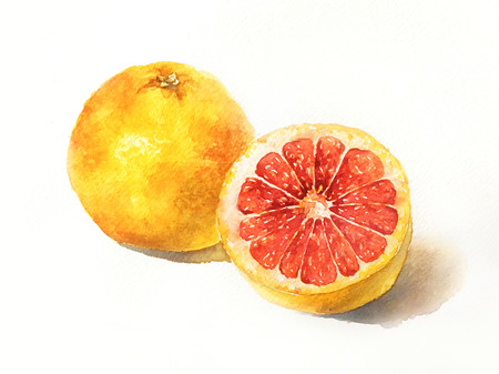 watercolor painted of grapefruit