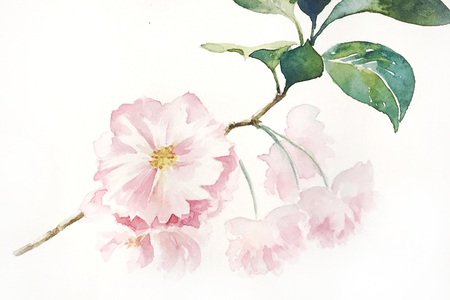 Double spring late cherry branches watercolor hand painting