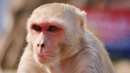 funk: Monkey Funk
