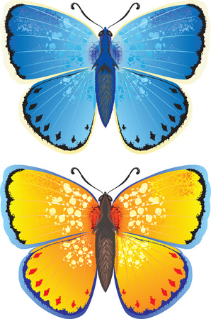 buterfly: Blue and Yelloy butterfly Illustration