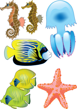 fish, starfish, jellyfish and seahorses Vector