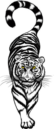 Vector illustration of black and white Crouching Tiger with yellow eyes. Vector