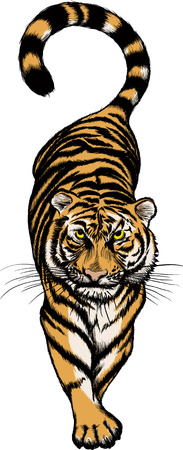 Vector illustration of Crouching Tiger isolated on white Vectores
