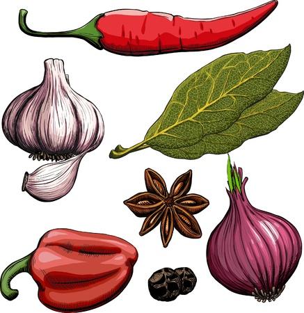 Spice. Oignon, ail, poivre, laurier, poivre chaud méthode de gravure de dessin Banque d'images - 9478602