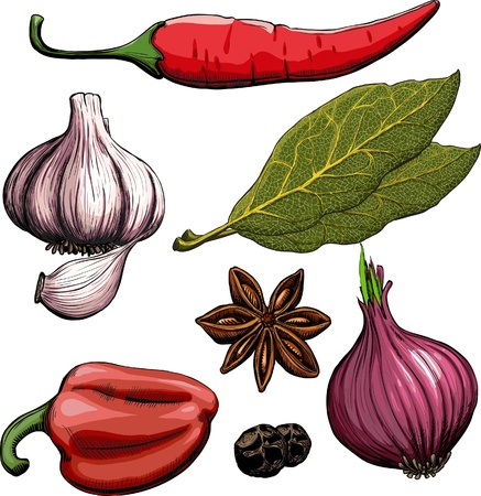 Spice. Onion, garlic, pepper, bay leaf, hot pepper drawing woodcut method Illustration