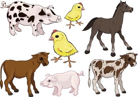 foal: Farm Animals Set. Baby animals. Horse, Pig, Cow, Chicken Illustration