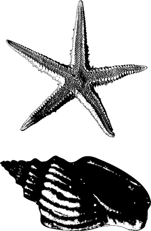 coastal: Shell and starfish drawn in view of the old prints on a white background