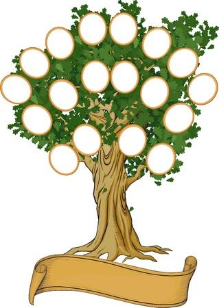 arbol geneal�gico: �rbol geneal�gico con los marcos y banner para el texto aislado en blanco Vectores