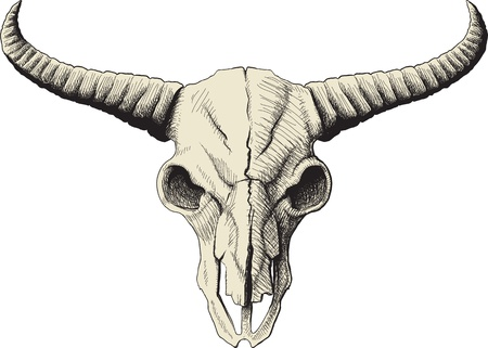 bull head: drawing a bison skull isolated on white background