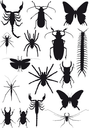 aracnidos: silueta negro diecis�is de insectos y ar�cnidos ex�ticos aislados sobre fondo blanco
