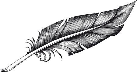 piuma bianca: quill penna Vettoriali