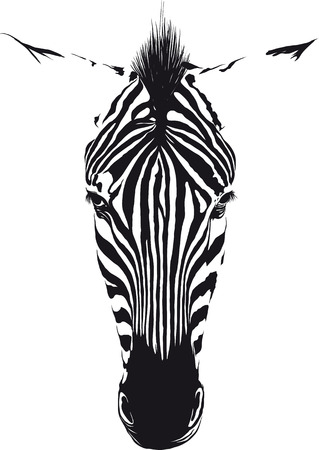 Zebra head from the front consisting of black lines on a white background Vectores