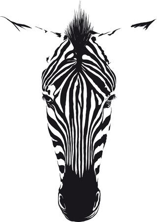 animal eye: Zebra testa dalla parte anteriore costituito da linee nere su sfondo bianco