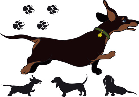 funny running Shorthair dachshund highly bullied short legs Vector
