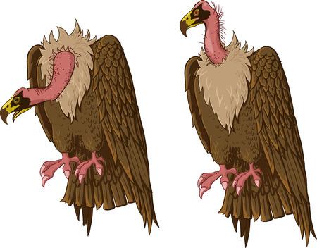 gyps: vulture illustration  Illustration