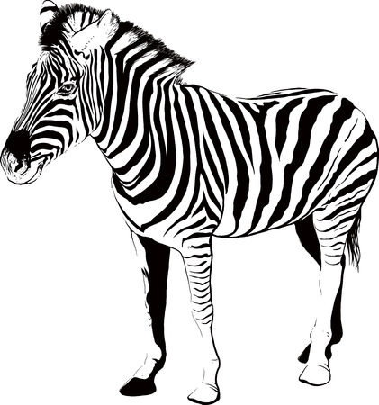 striped zebra silhouette in profile isolated on white background Illustration