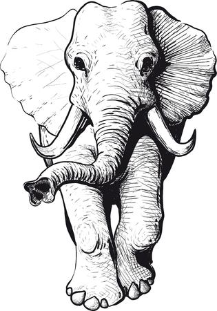 disegno: Vagando elefante con sollevato tipo tronco di testa Vettoriali