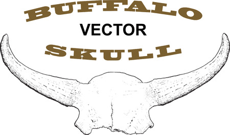 replaced: Old skull of buffalo horns forming the likeness of the frame. Isolated on white. The text inside the frame can be easily replaced