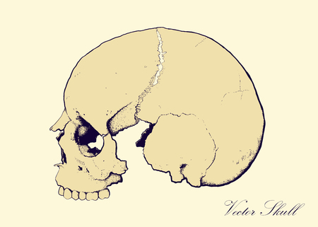 alfa: skull on retro colors backgrounds seen in profile, without lower jaw