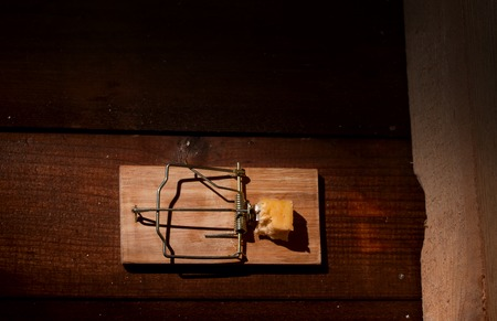 annihilate: cocked mousetrap with a piece of cheese stands near rat or mouse holes