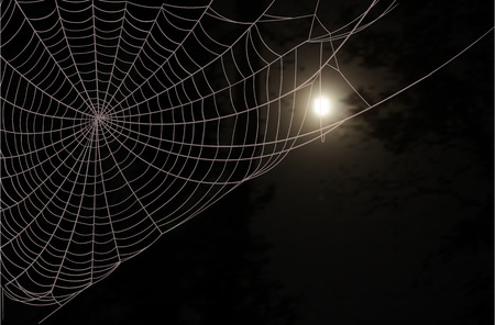 fog forest: Dark wood, a large spider web and the full moon in the night sky Illustration