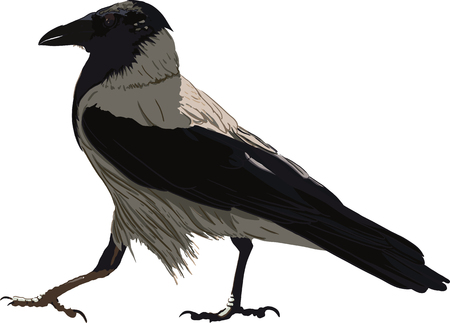 Walking Black Crow Illustration