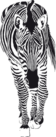 The Going Zebra