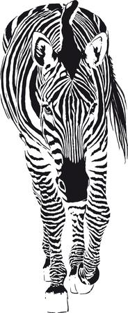 gazing: The Going Zebra