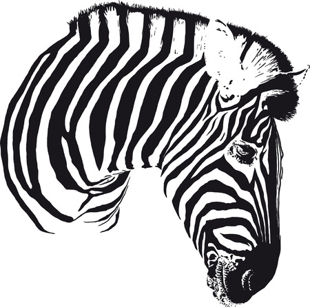 Zebra Head Illustration