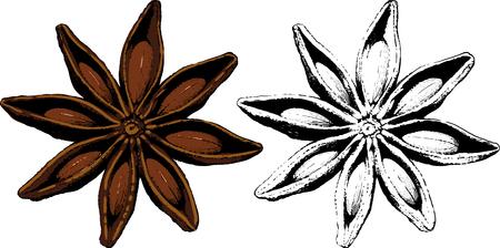 Reife Frucht Gewürz Sternanis in farbig und schwarz und weiß. Vektorgrafik