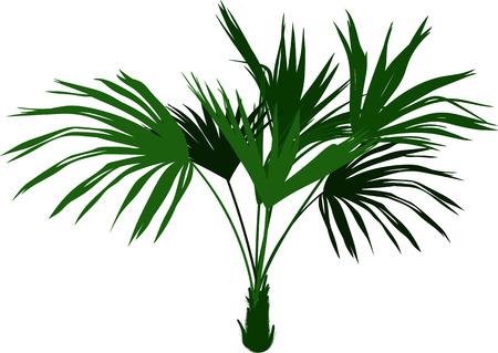 Decorative homemade palm tree vector