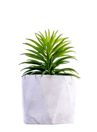 beautiful similar to real artificial plants in ceramic pots isolated on white background Stock Photo