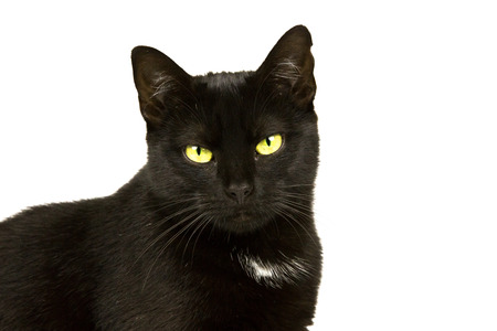 Black cat with yellow-green eyes portrait photo