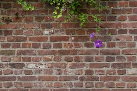 twining: A brick wall with twining flowers