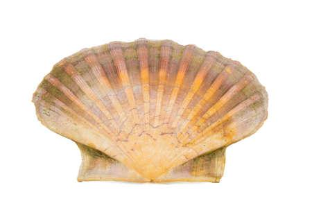 Einer Schale Jakobsmuschel, freigestellt VOR-weiss Standard-Bild