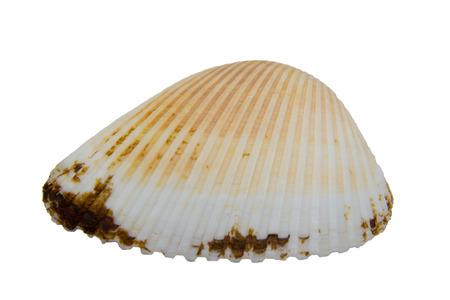 isoliert: Eine Muschel einzel, isoliert Stock Photo