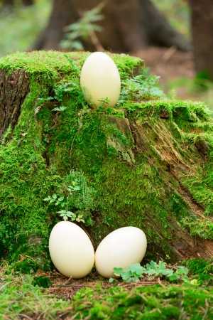 rhea: Rhea eggs on a stump