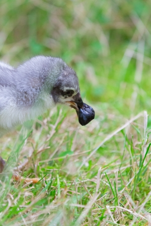 slipped: A fledgling on a meadow